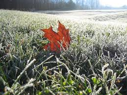 frost.jpeg